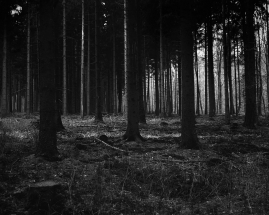 papers.co-mj53-forest-dark-scary-night-trees-nature-30-wallpaper